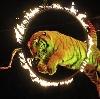 Цирки в Щекино