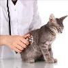 Ветеринарные клиники в Щекино